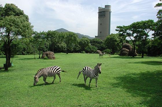 豊橋総合動植物公園 イメージ